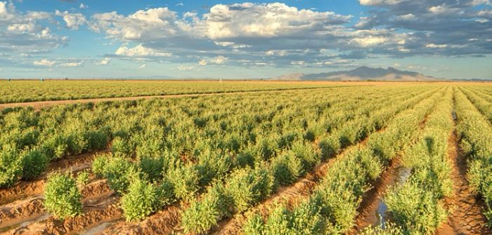 Bridgestone and NRGene to collaborate on guayule research