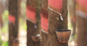 Yokohama outlines commitment to sustainable natural rubber procurement