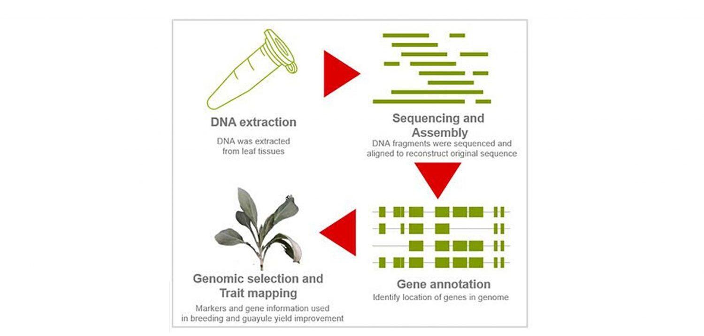 Bridgestone and partner NRGene announce natural rubber genetic breakthrough - Tire Technology International